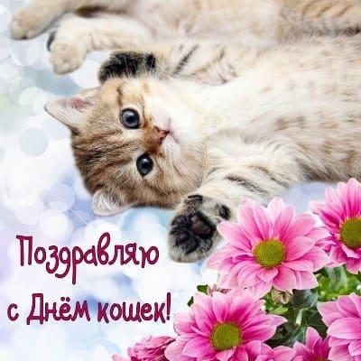 веселые картинки про котов