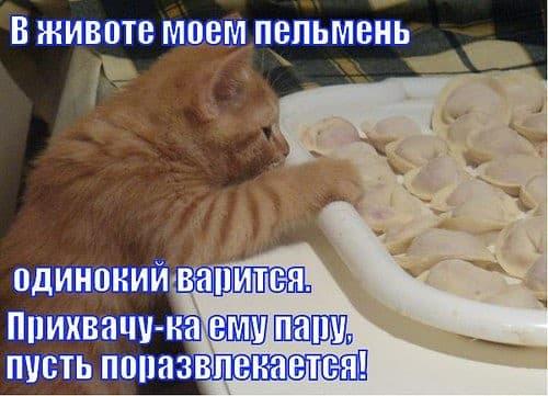 кот есть пельмени
