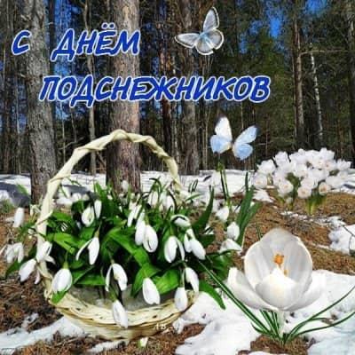 фото лесных цветов