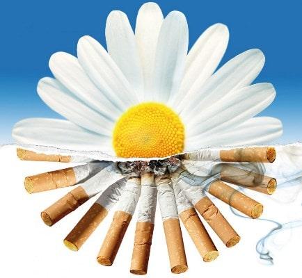 Поздравления на Всемирный День без табака (стихи, прозы, СМС)