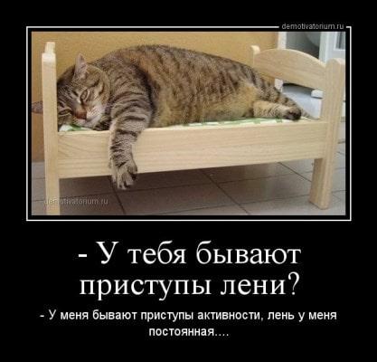 картинки про ленивых котов