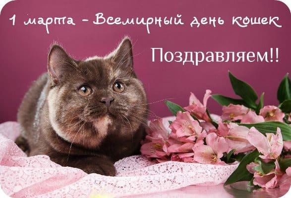 Поздравления и картинки с Днем кошек (красивые и прикольные)
